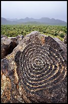Circular Hohokam petroglyphs on Signal Hill. Saguaro National Park, Arizona, USA. (color)
