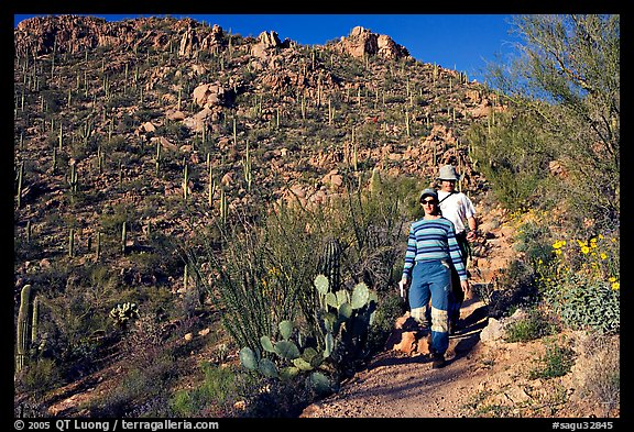 Hiking down Hugh Norris Trail amongst saguaro cactus. Saguaro National Park (color)