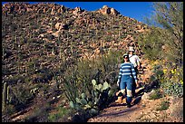 Hiking down Hugh Norris Trail amongst saguaro cactus. Saguaro National Park, Arizona, USA.