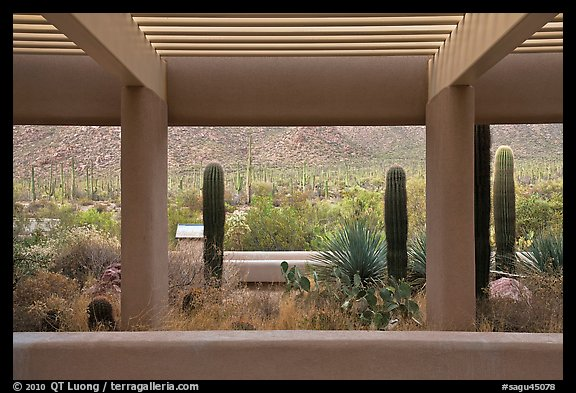 Red Hills Visitor Center. Saguaro National Park, Arizona, USA.