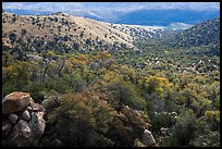 Chaparral and oaks along Miller Creek, Rincon Mountain District. Saguaro National Park ( color)