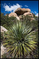 Sotol and balanced rock, Rincon Mountain District. Saguaro National Park ( color)