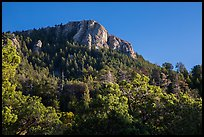 Rincon Peak rising above pine forests. Saguaro National Park ( color)