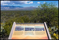 Where have all the saguaro gone interpretive sign. Saguaro National Park ( color)