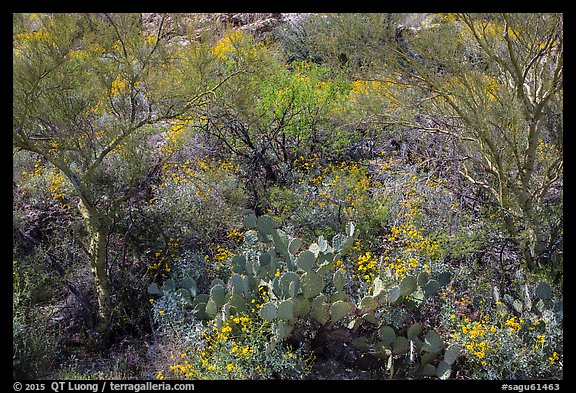 Close-up of desert plants with sun in the spring, Rincon Mountain District. Saguaro National Park (color)