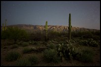 Cactus, Rincon Mountains, and star field at night. Saguaro National Park, Arizona, USA.