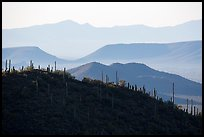 Cactus and distant desert mountain ridges. Saguaro National Park ( color)