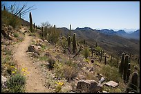 Hugh Norris Trail. Saguaro National Park ( color)