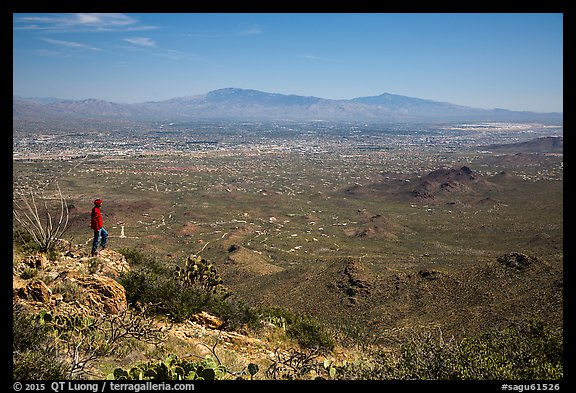 Visitor looking, Wasson Peak overlooking Tucson. Saguaro National Park (color)