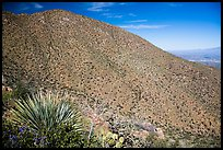 Wasson Peak. Saguaro National Park ( color)