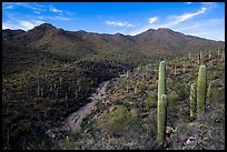 Wash, cactus, and Wasson Peak. Saguaro National Park ( color)