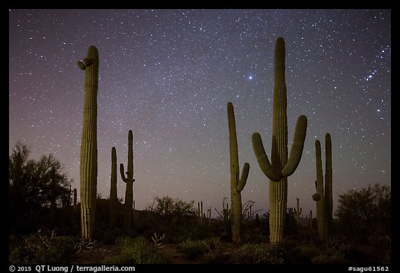 Saguaro cacti and starry night sky. Saguaro National Park (color)