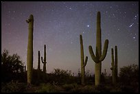 Saguaro cacti and starry night sky. Saguaro National Park, Arizona, USA.