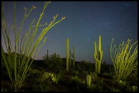 Ocotillo and saguaro cactus at night. Saguaro National Park, Arizona, USA.