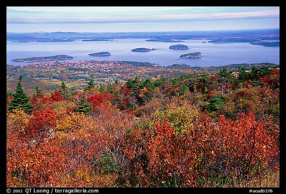 Shrubs and Frenchman Bay from Cadillac mountain. Acadia National Park (color)