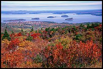 Shrubs and Frenchman Bay from Cadillac mountain. Acadia National Park, Maine, USA.