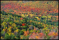 Valley filled  with trees in autumn foliage. Acadia National Park, Maine, USA.
