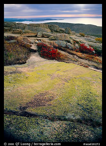 View from top of Mt Cadillac with granite slab covered with lichen. Acadia National Park (color)
