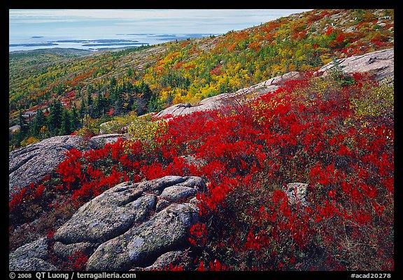 Shrubs and granite slabs on Cadillac mountain. Acadia National Park (color)