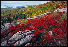 Shrubs in autumn color and granite slabs on Cadillac mountain. Acadia National Park, Maine, USA.