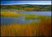 Reeds, pond, and hill with fall color. Acadia National Park, Maine, USA. (color)