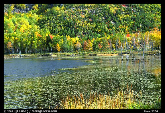 Pond and autumn colors. Acadia National Park (color)