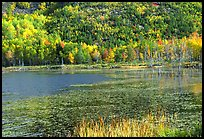 Pond and autumn colors. Acadia National Park, Maine, USA.