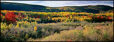 Forest landscape in the fall. Acadia National Park (Panoramic color)