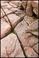 Pink granite slab with cracks. Acadia National Park, Maine, USA.