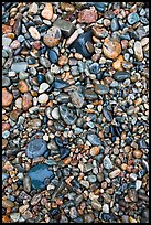 Pebbles of various sizes and colors. Acadia National Park, Maine, USA.