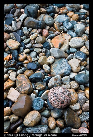 Close-up of multicolored pebbles. Acadia National Park, Maine, USA.