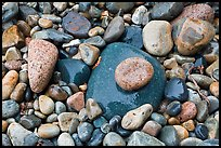 Colorful pebbles shining in the rain. Acadia National Park, Maine, USA.