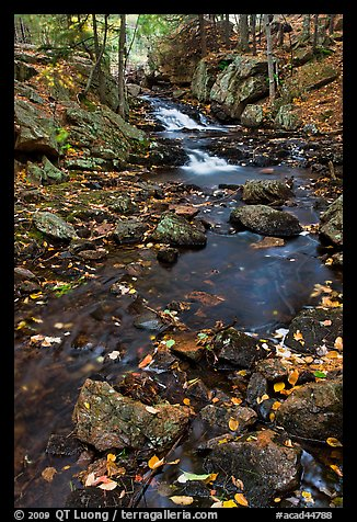Stream in autumn. Acadia National Park (color)