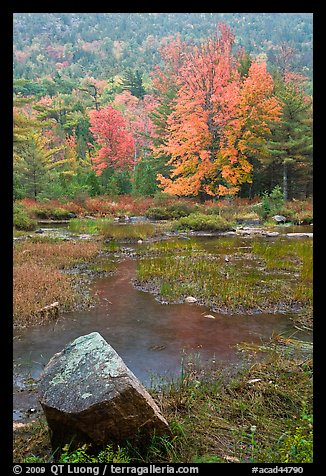 Pond in the rain with trees in fall foliage. Acadia National Park (color)