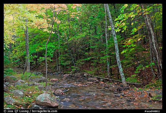 Forest stream in the fall. Acadia National Park (color)