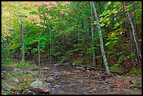 Forest stream in the fall. Acadia National Park, Maine, USA.