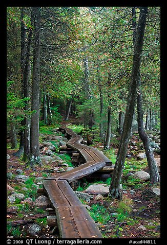 Boardwalk in forest. Acadia National Park (color)