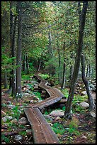 Boardwalk in forest. Acadia National Park, Maine, USA. (color)
