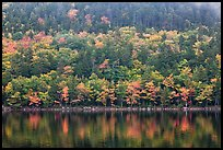 Hillside with trees in autumn colors and pond reflections. Acadia National Park ( color)