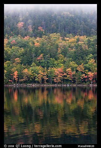 Hillside in autumn foliage mirrored in Jordan Pond. Acadia National Park (color)