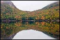 Hill curve and trees in fall foliage reflected in Jordan Pond. Acadia National Park, Maine, USA.