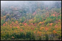 Trees in fall foliage on hillside beneath cliff. Acadia National Park, Maine, USA.