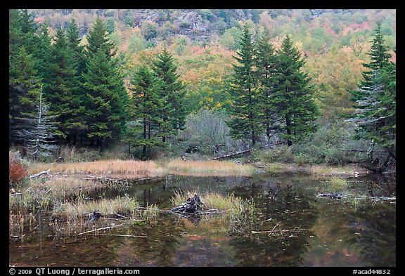 Pond and pine trees. Acadia National Park (color)