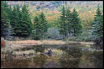 Pond and pine trees. Acadia National Park, Maine, USA.