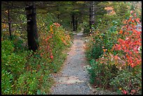 Trail in autumn on Jordan Pond shores. Acadia National Park ( color)