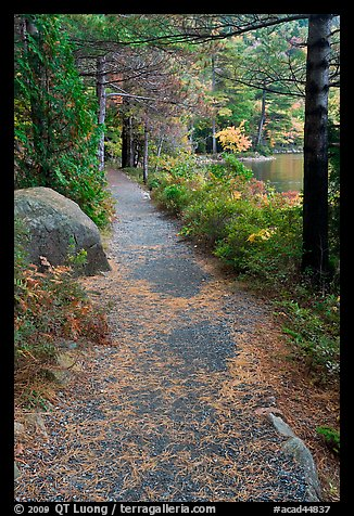 Trail in the fall on the shore of Jordan Pond. Acadia National Park, Maine, USA.