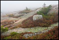 Summit of Cadillac Mountain during heavy fog. Acadia National Park ( color)
