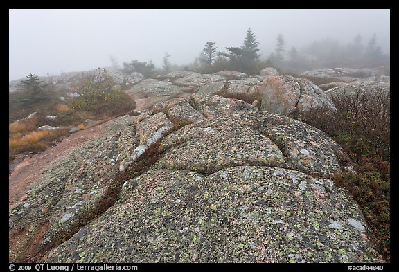Lichen-covered slabs in the heavy mist, Mount Cadillac. Acadia National Park, Maine, USA.