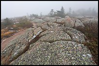 Lichen-covered slabs in the heavy mist, Mount Cadillac. Acadia National Park ( color)
