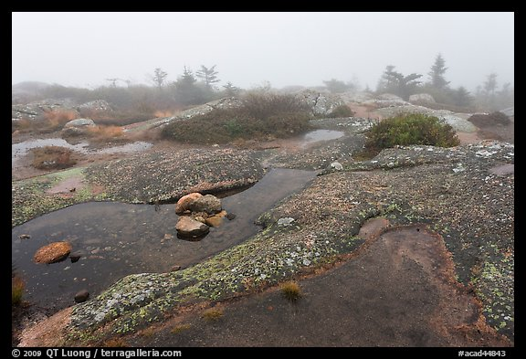 Water-filled holes in granite slabs and fog, Cadillac Mountain. Acadia National Park, Maine, USA.